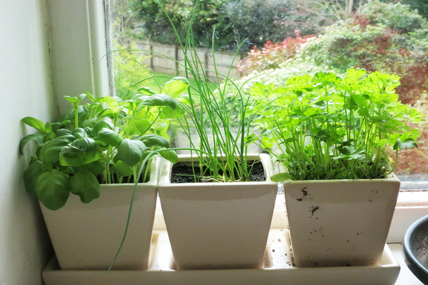 Выращивание клубники зимой в теплице > отзывы + видео + фото