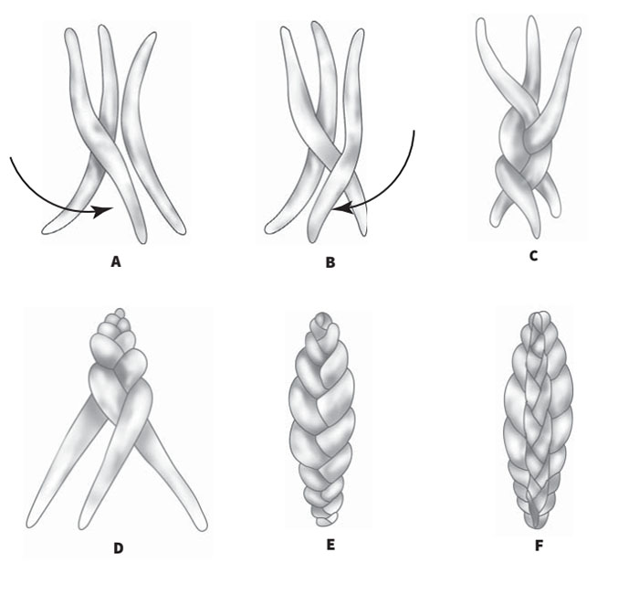 Способы плетения кос из чеснока - агрономы