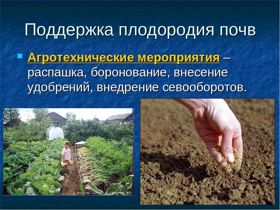 Как повысить плодородие почвы, вещество повышающее плодородие