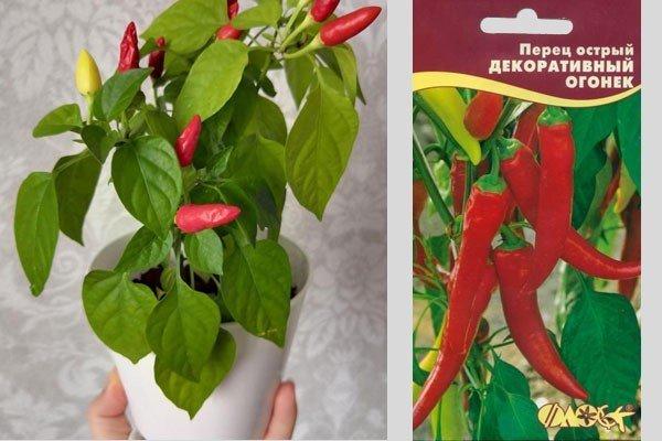 Перец огонек - выращивание в домашних условиях и советы по выбору сорта (100 фото + видео)