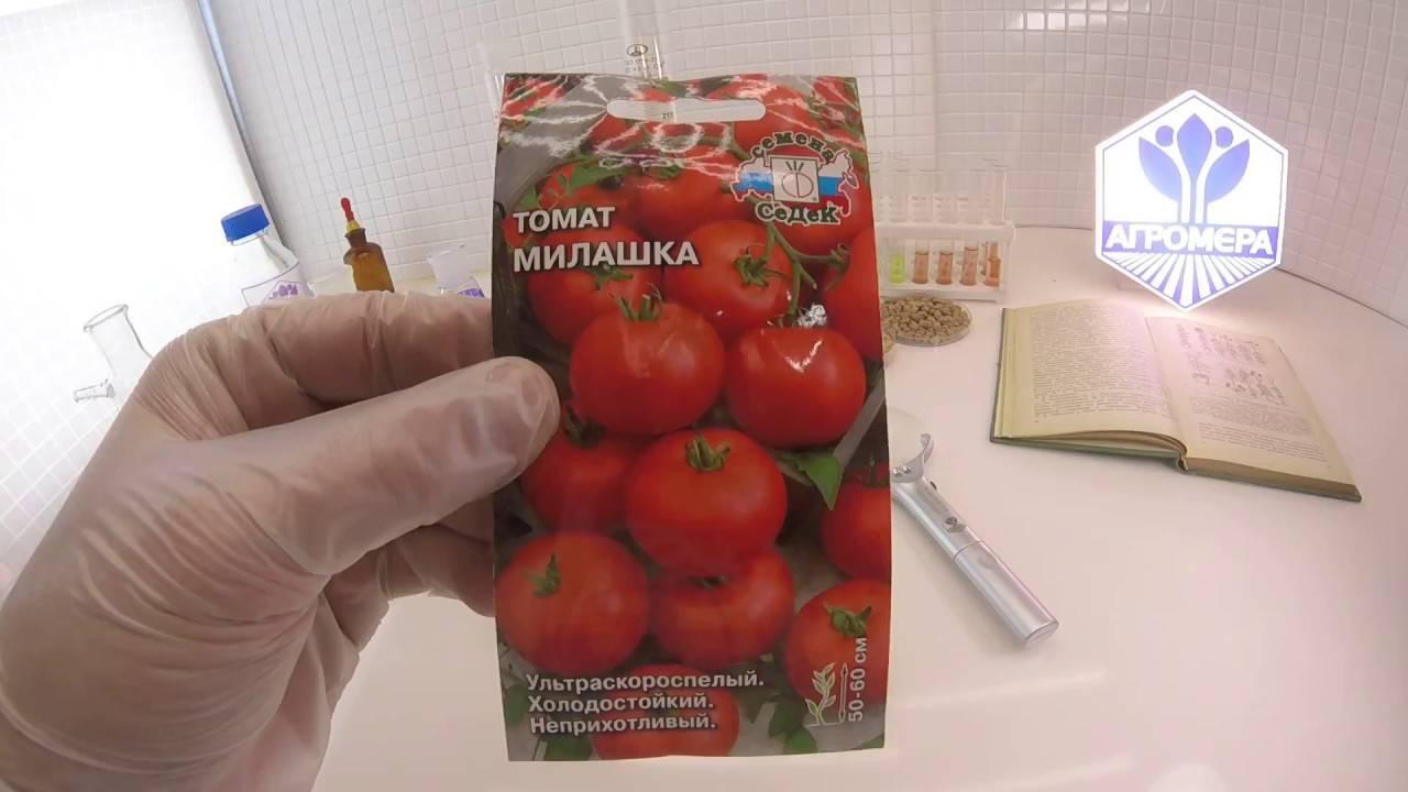 Ультраскороспелый томат: описание, характеристика, фото