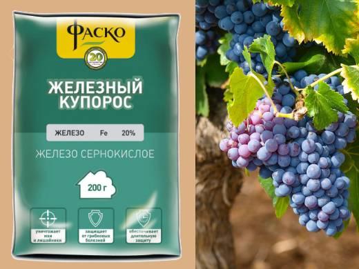 Обработка винограда железным купоросом: борьба с заболеваниями и профилактические меры