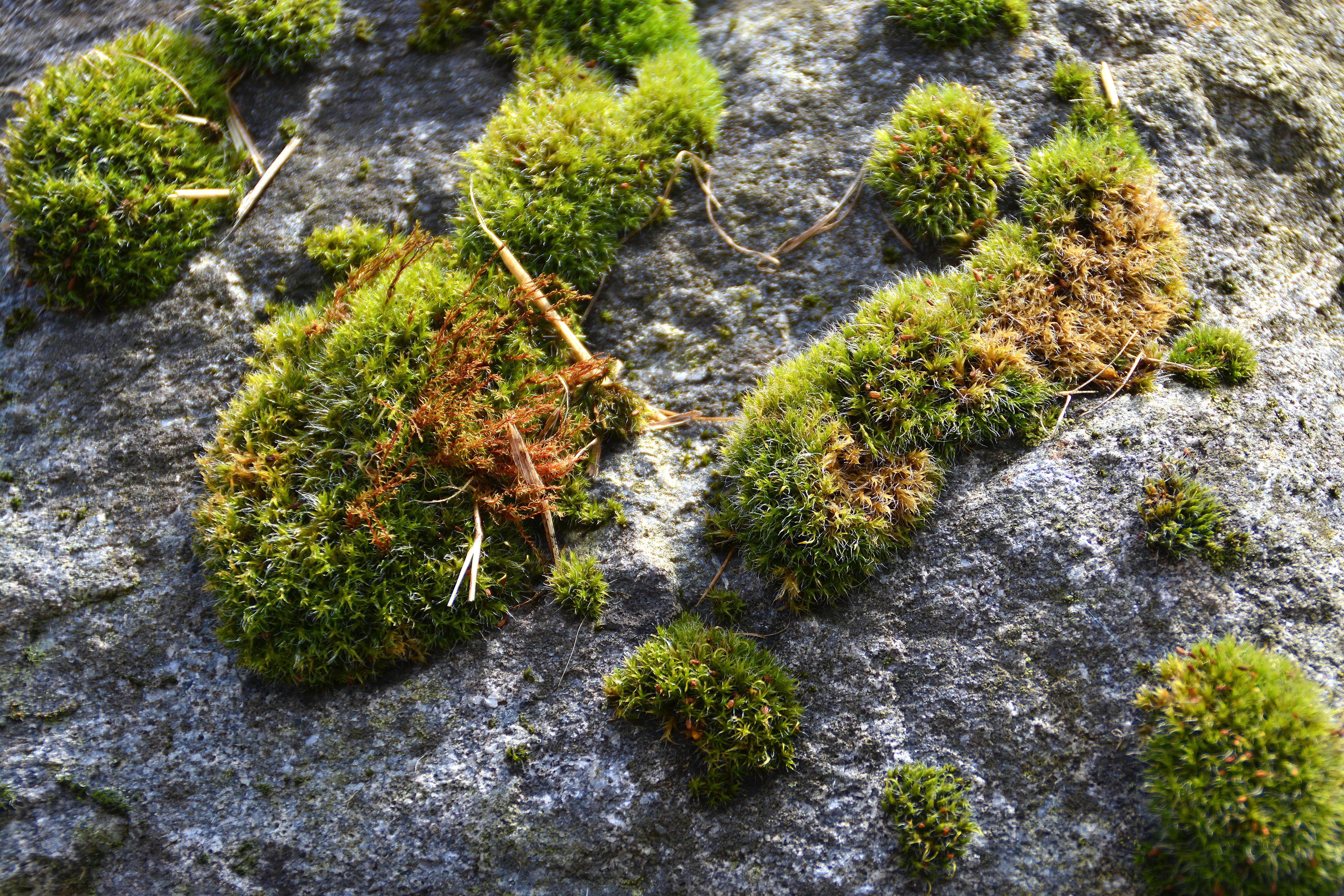 Как сделать сад мхов своими руками