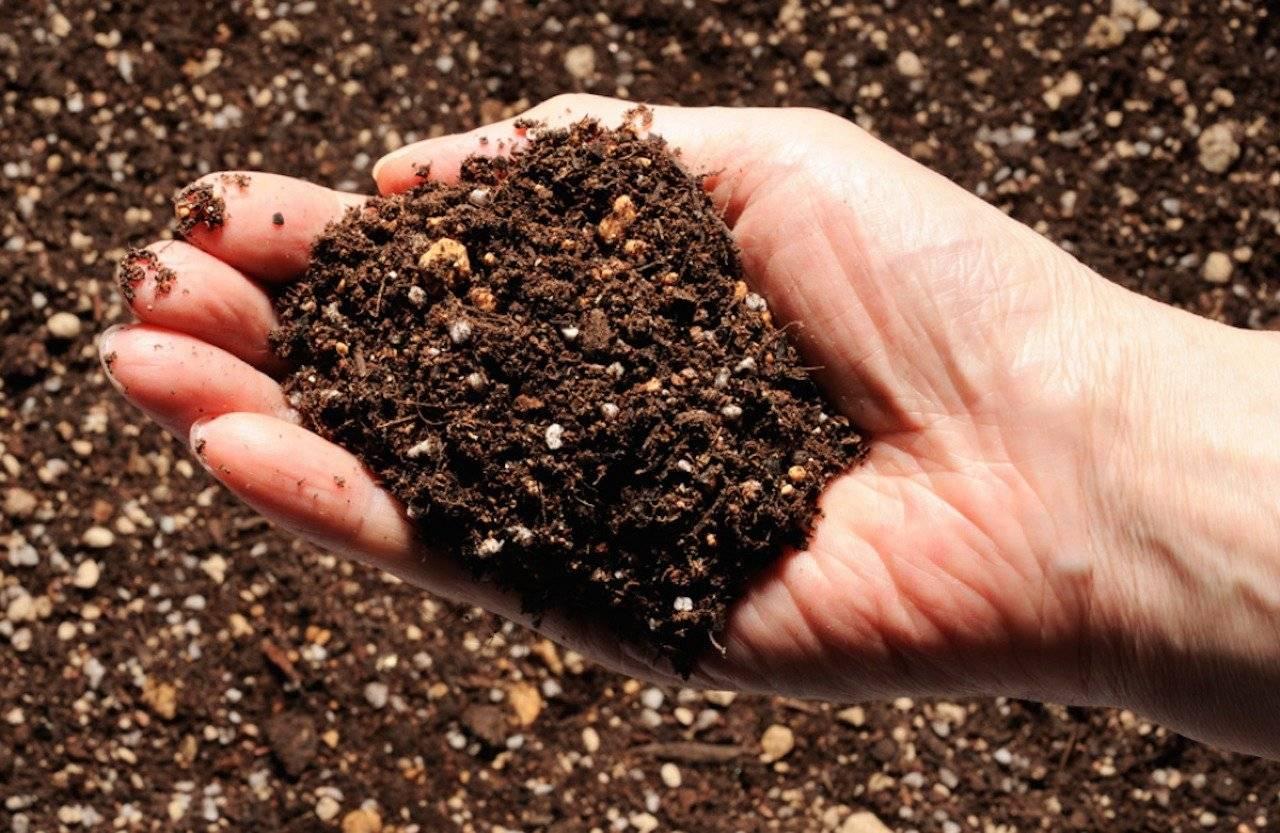 Особенности применения костной муки и органических удобрений из нее в саду и огороде - почва.нет