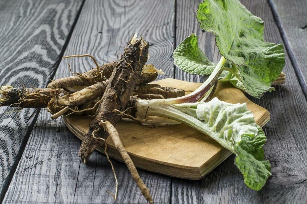 Ревень лекарственный - свойства, польза, пищевая ценность, применение в народной медицине.