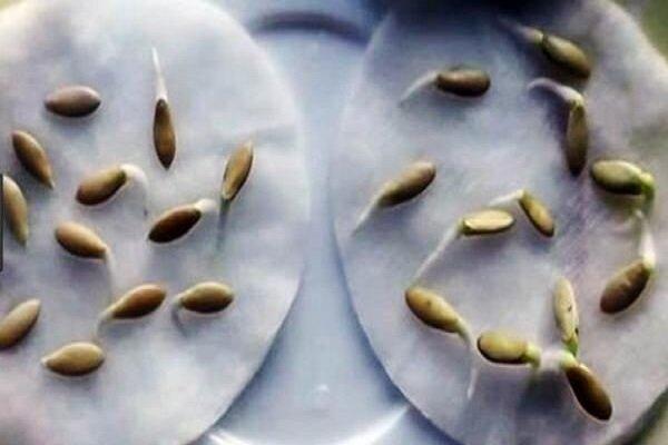 От чего зависит всхожесть семян и как быстро прорастить огурцы - всё о землеводстве