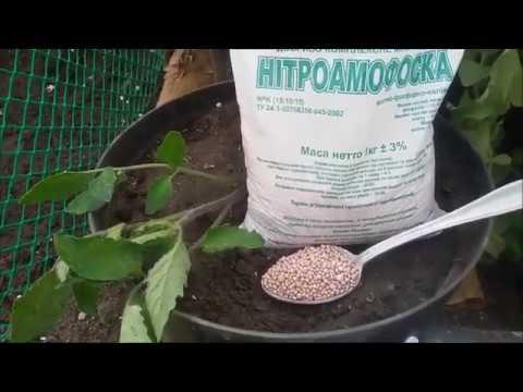 Нитрофоска, нитроаммофоска, азофоска и борофоска для огурцов: польза и применение удобрений