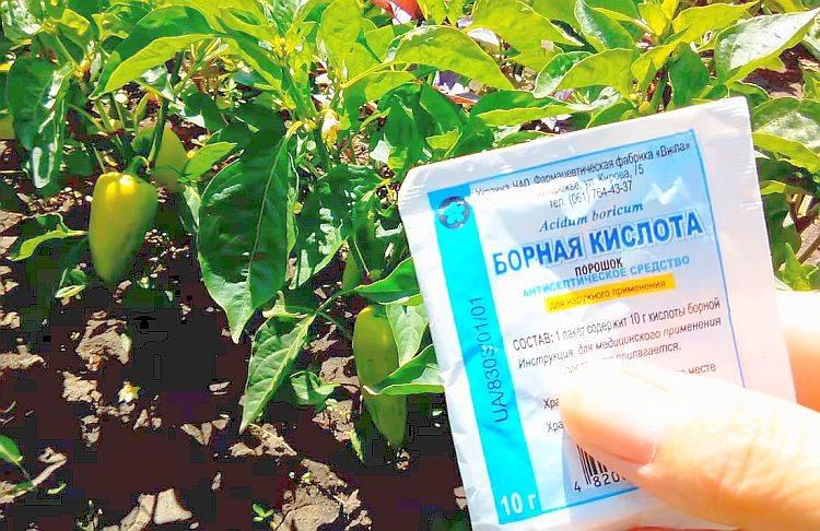 Борная кислота: применение в садоводстве, признаки нехватки бора у растений