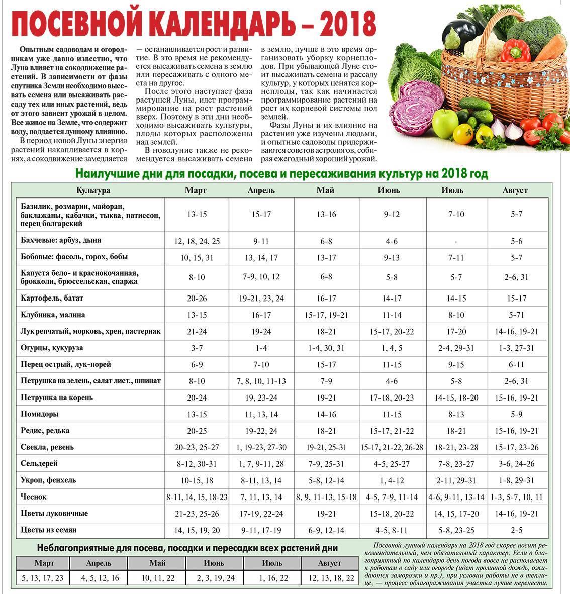 Когда нужно убирать лук в 2021 году в Подмосковье и Московской области с грядки на хранение