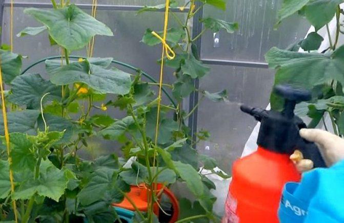 Удобрение мочевина: применение на огороде, инструкция, советы