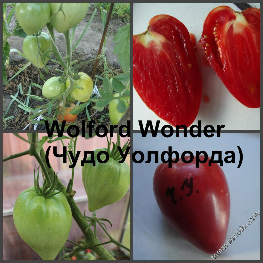Характеристика сорта томатов чудо уолфорда - агро журнал pole39.ru