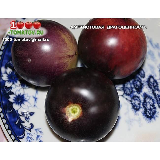 Томат аметистовая драгоценность – характеристика и описание сорта, урожайность, выращивание, отзывы
