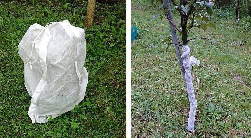 Нужно ли укрывать яблоню на зиму в сибири и как это правильно делать