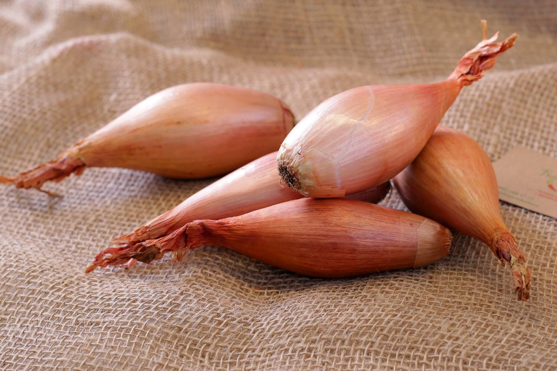 Как называется лук для еды: название сорта с фото и описанием