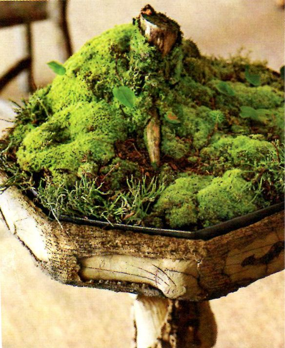 Использование мхов и лишайников в дизайне сада | сайт о саде, даче и комнатных растениях.