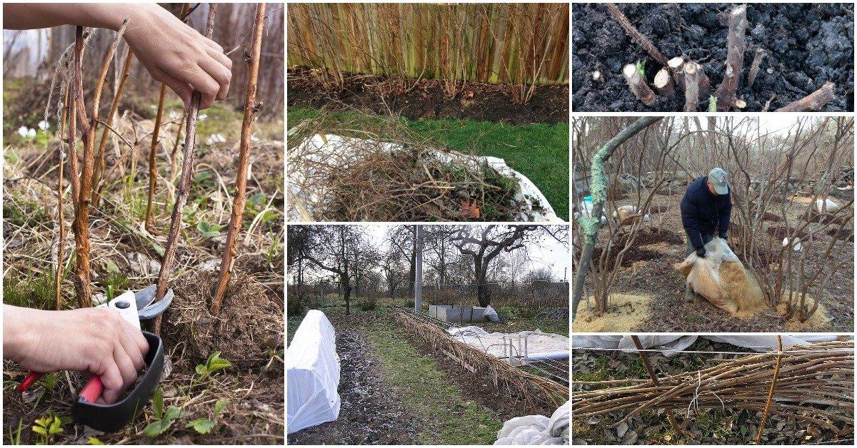 Уход за астильбой осенью и подготовка к зиме: удобрение, обрезка и укрытие