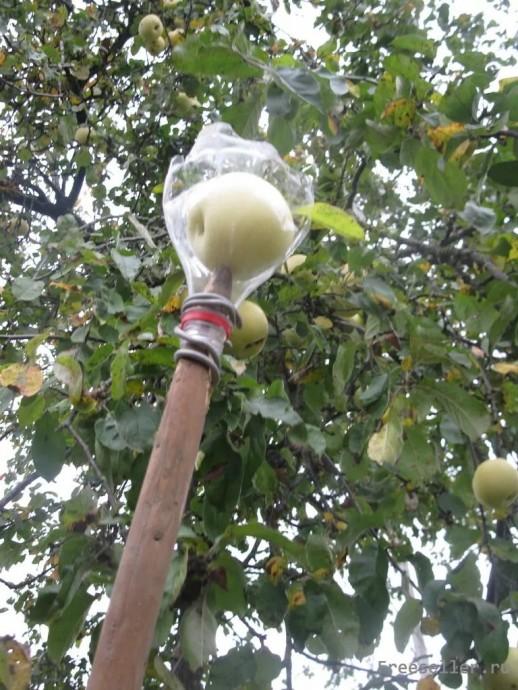 Как собрать вишню с высокого дерева: самодельные приспособления и устройства