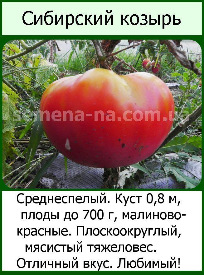 Описание высокоурожайного томата козырь и отзывы потребителей