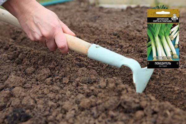 Особенности и сроки посадки лука-порея из семян на рассаду для 2021 года