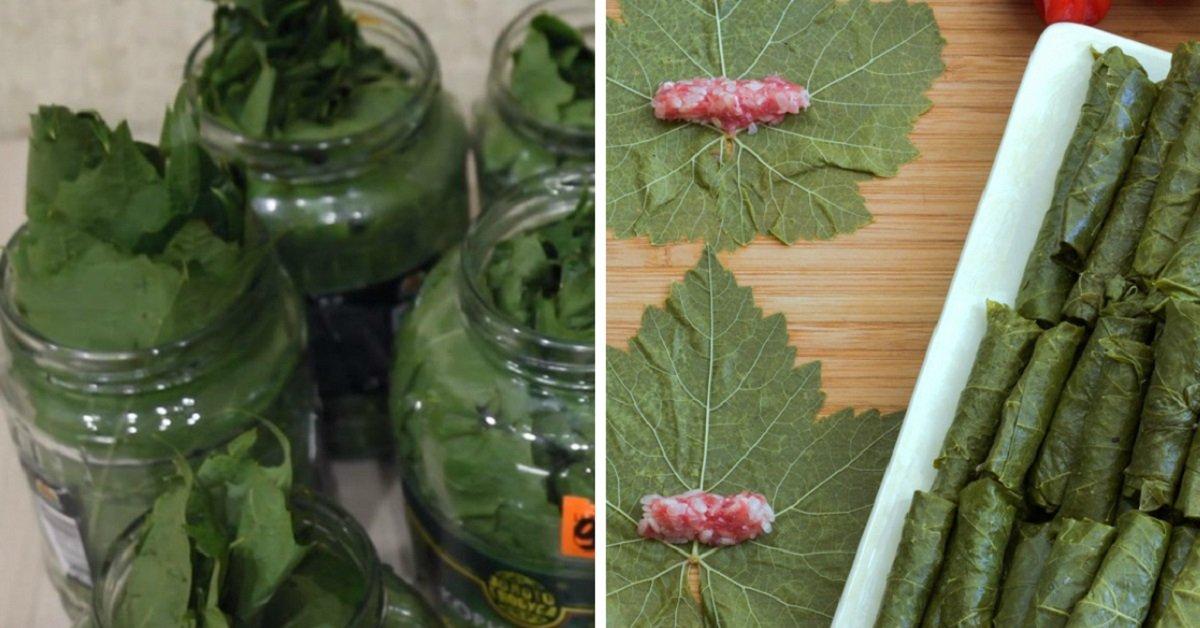 Пять рецептов заготовки виноградных листьев на зиму