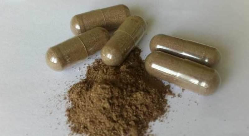 Кора муравьиного дерева: польза и вред, применение, отзывы