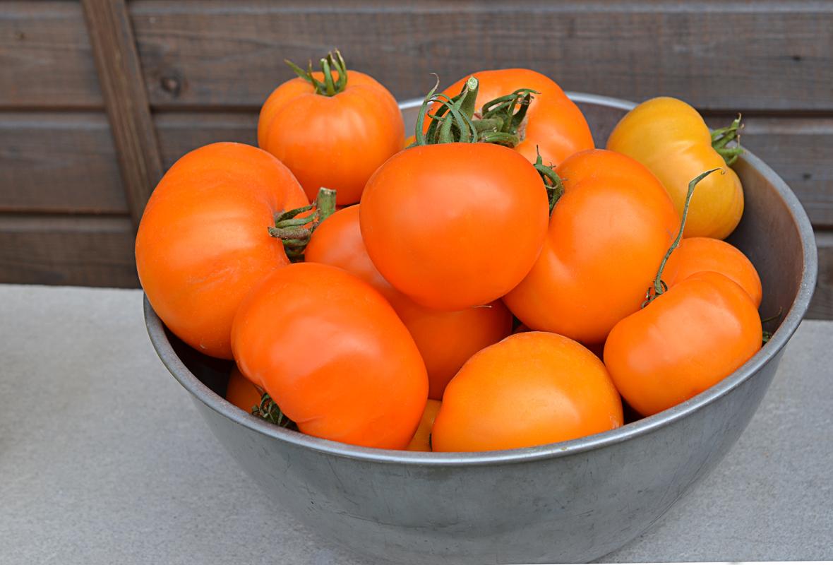 Характеристика и описание сорта томата медово сахарный (медовые росы) – дачные дела
