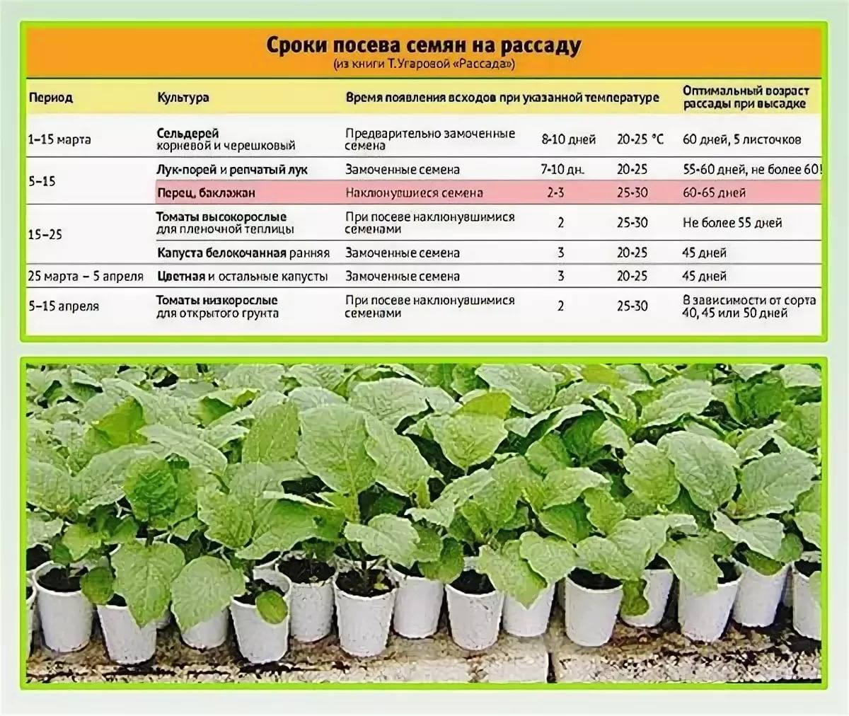 Сроки посадки томатов на Урале на рассаду, когда лучше высевать и как ухаживать
