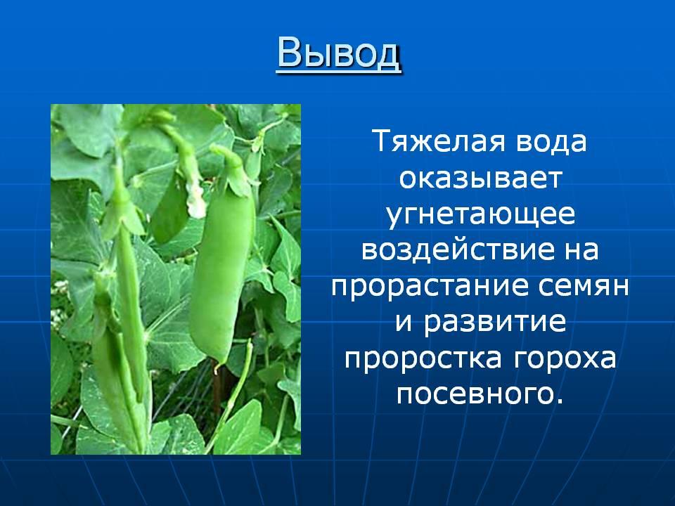 Описание и характеристика лучших семян сортов и видов гороха