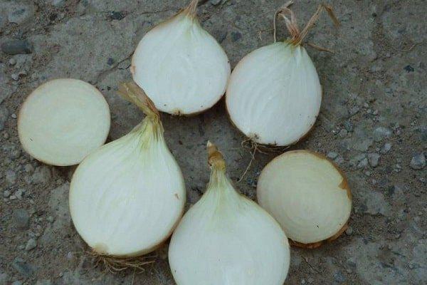 Сладкий лук: какие сорта выбрать, самые сочные виды, описание (репчатый, красный и белый), что садить в подмосковье, выращивание