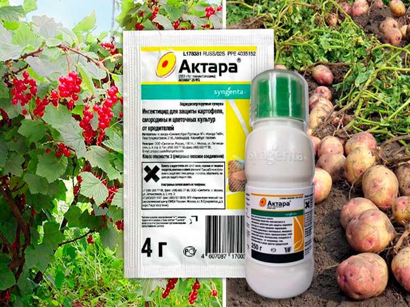 Как обрабатывать растения актелликом от вредителей