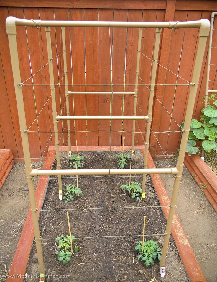 Что такое шпалера для помидоры | вырасти сад!