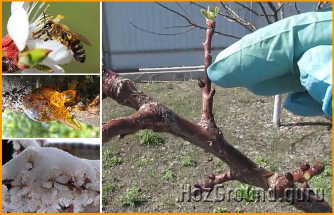 Как заставить деревья плодоносить - лучшие способы
