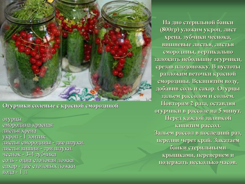 Засолить огурцы на зиму холодным способом, хрустящие, вкусные, рецепт с фото