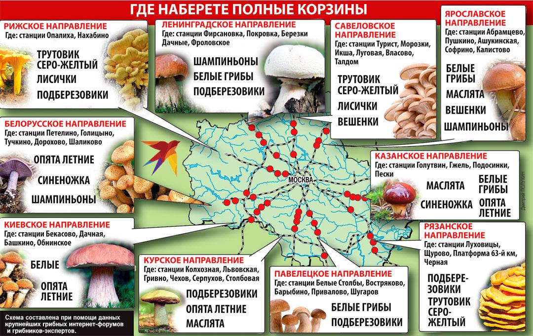 Какие съедобные грибы можно будет найти в подмосковье в сентябре 2020