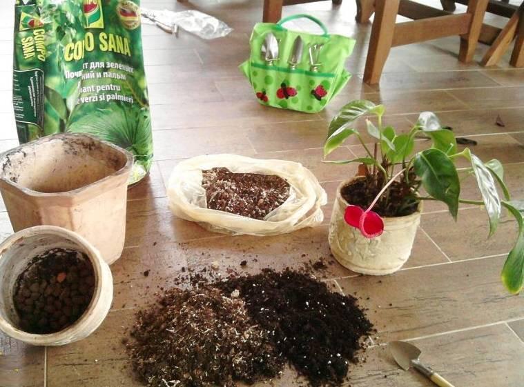 Выбор земли для лимона и приготовление почвенной смеси в домашних условиях