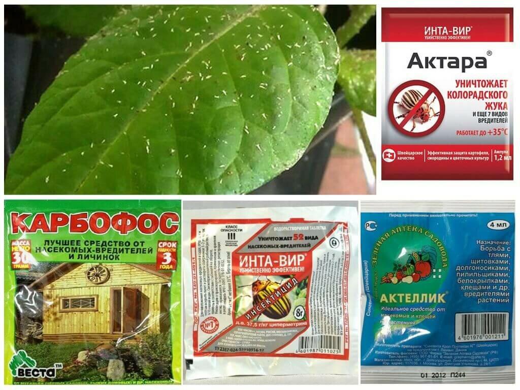 Биопрепараты для защиты растений от вредителей и болезней – методы и принципы действия, преимущества, производители и типы