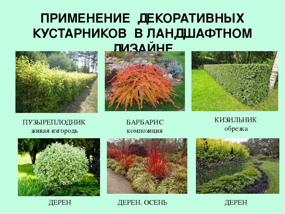 Названия и фото декоративных цветущих кустарников для дачи, цветущих весной, летом и осенью