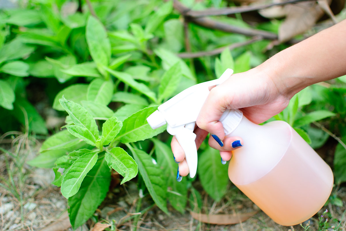 Ядохимикаты и препараты для борьбы с вредителями и болезнями растений - борьба с болезнями и вредителями сада | дом, сад и огород
