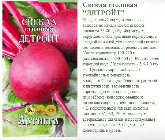 Лук суворова: описание, польза, противопоказания, особенности выращивания