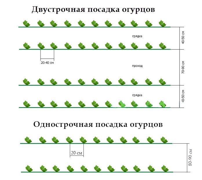 Капуста мегатон: описание и характеристика гибрида, особенности посадки и выращивания, а также правила ухода за культурой, сбор урожая и условия хранения