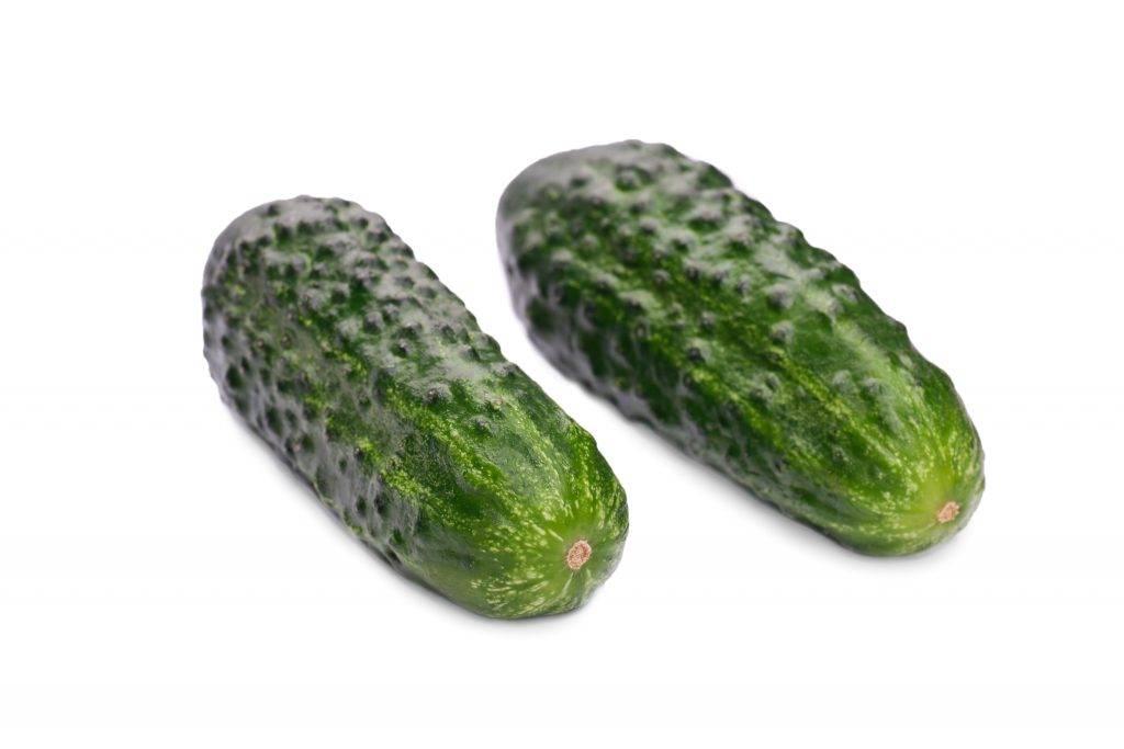 Сорт огурцов марьина роща f1: характеристика, описание с фото, отзывы