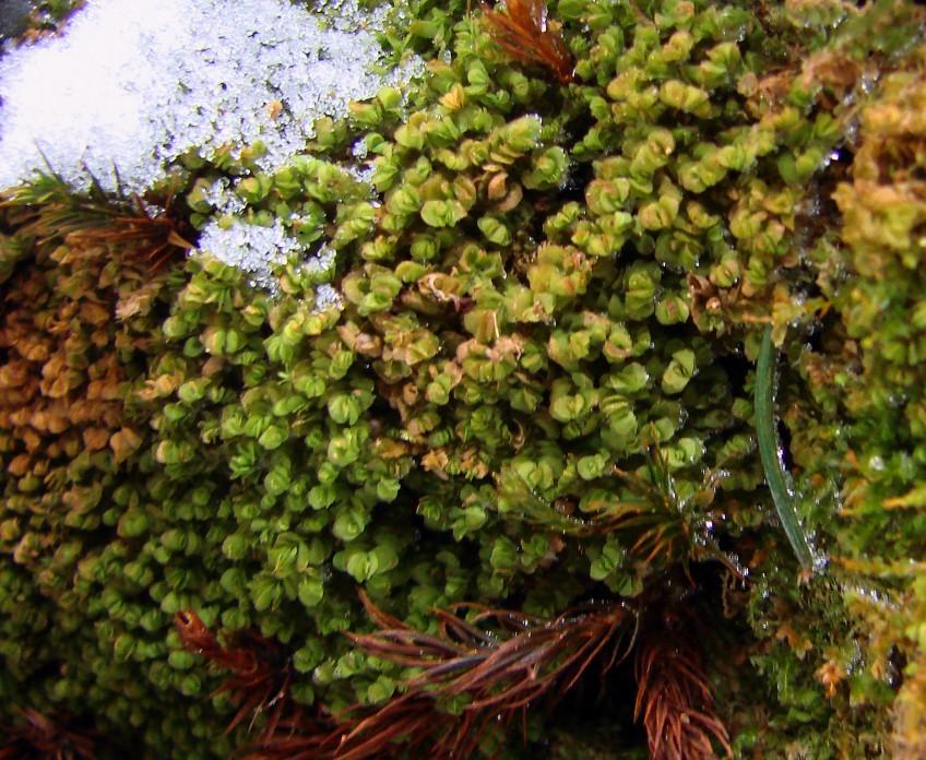 Сад мхов на даче: посадка и выращивание мха на участке