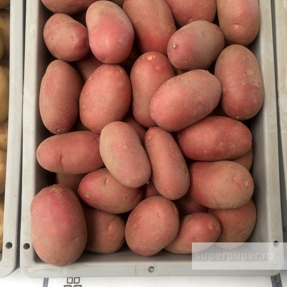 Картофель лабелла: описание и характеристика, отзывы
