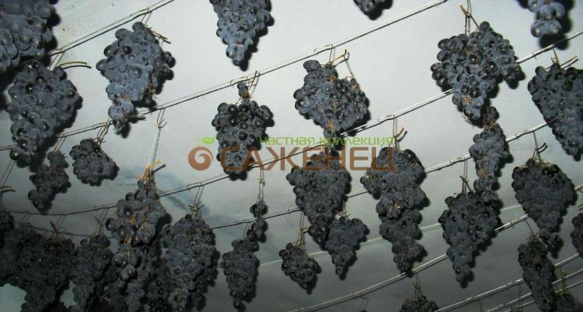 Как хранить виноград: правила и способы в домашних условиях на зиму, сроки