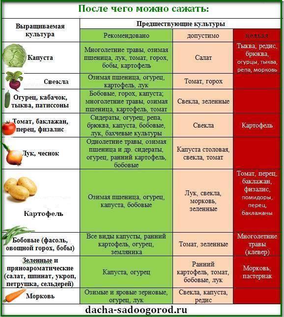 Баклажаны, помидоры и огурцы в одной теплице: можно ли сажать рядом