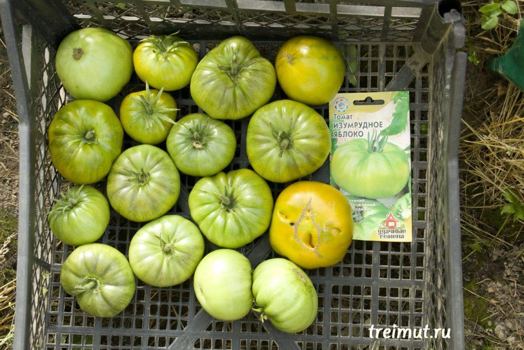 ᐉ томат штамбовый крупноплодный характеристика и описание сорта - ogorod-u-doma.ru