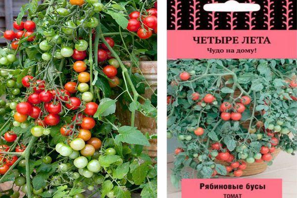 Томат «красная гроздь» характеристика и описание сорта, фото, отзывы