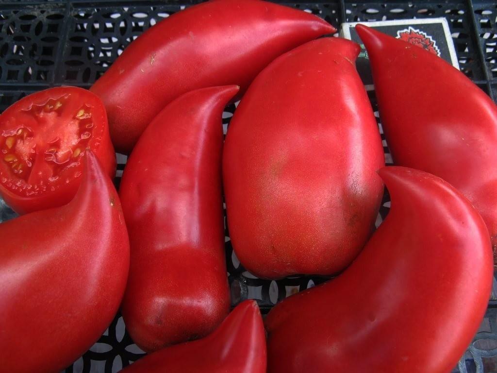Редкие сорта томатов с описанием, фото, отзывами