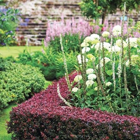 Обзор низкорослых бордюрных многолетних растений