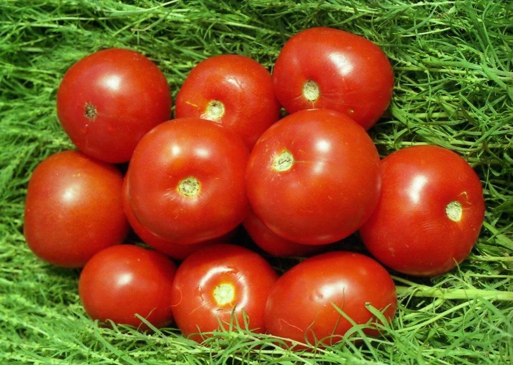 Томаты для ростовской области: семена лучших сортов для открытого грунта с фото
